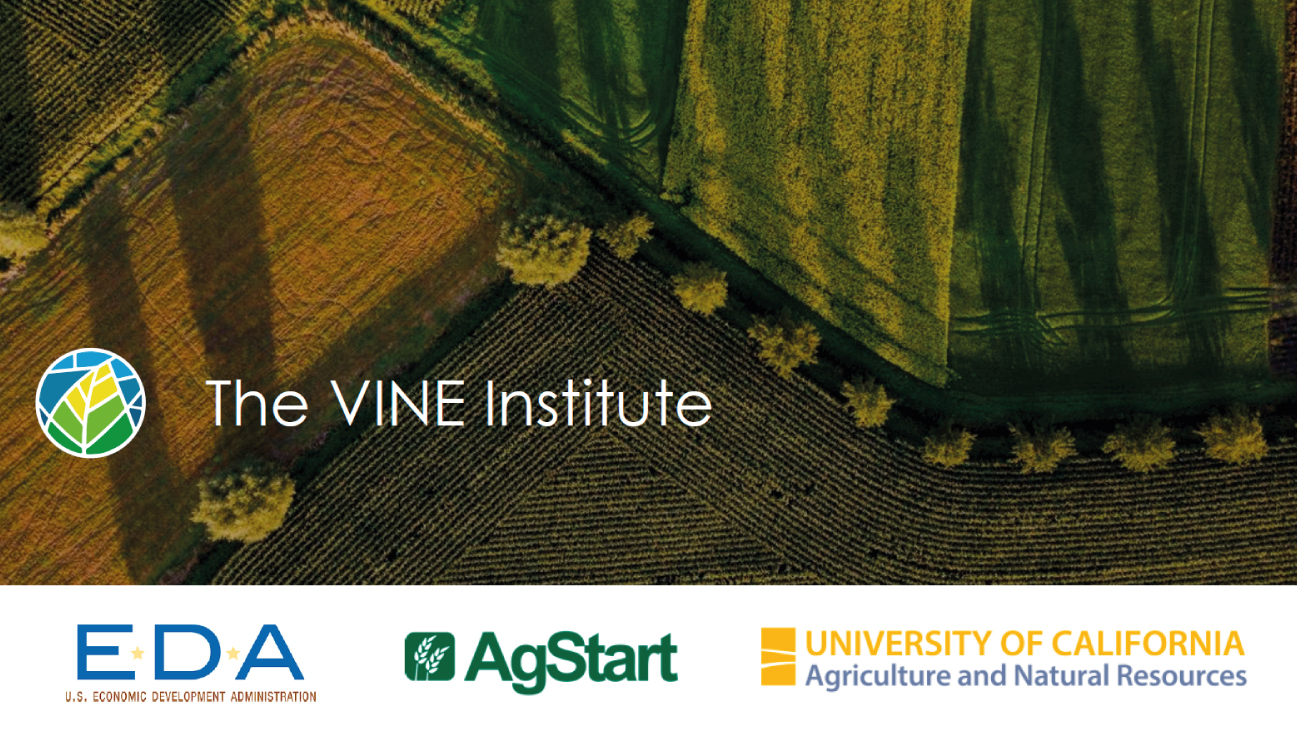 The VINE Institute